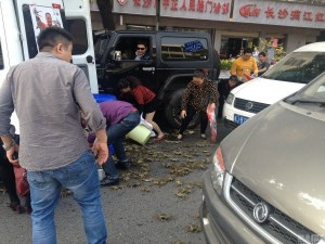 china-changsha-crabs-alligator-spilled-in-traffic-accident-looted-by-chinese-passerbys-01-600x450