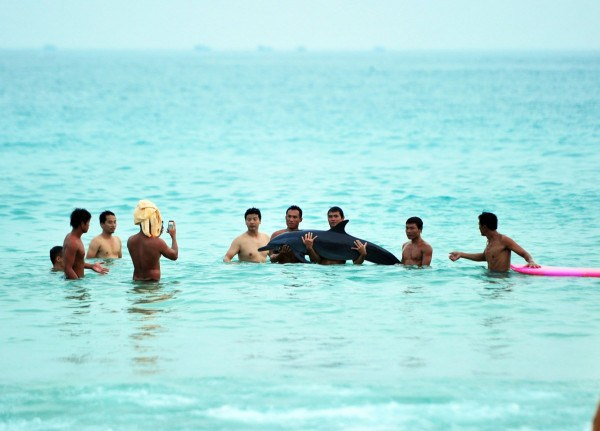 tourists-taking-pictures-with-stranded-dolphin-angers-netizens-06-600x431