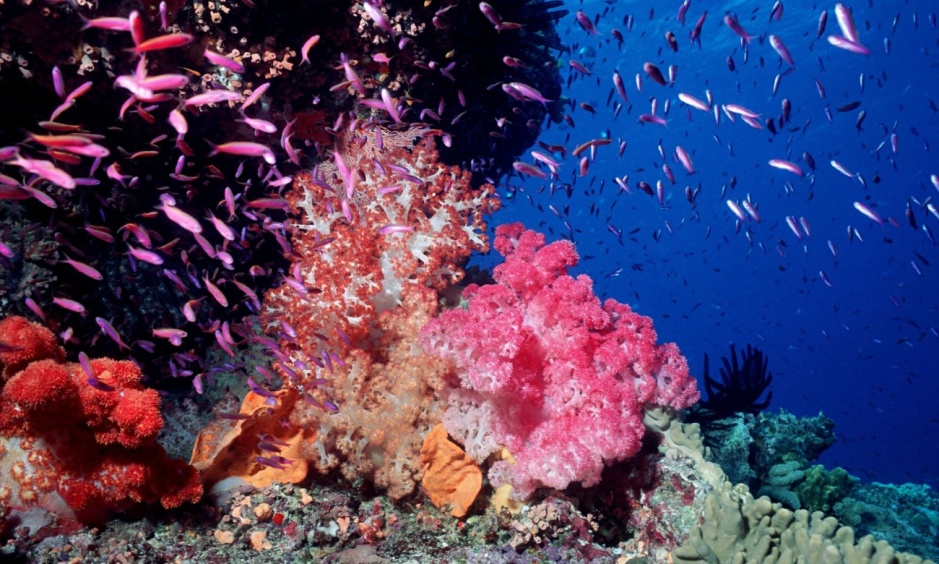 GREAT-BARRIER-REEF-CORAL-001